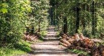 Bulgaristan ormanlarının doğal tedavisi