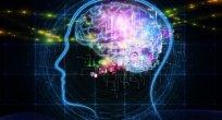 Rus bilim insanları, insan hafızasına dair bir sır perdesini daha araladı